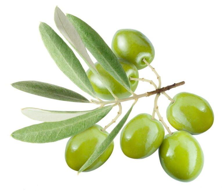 Olivsmör