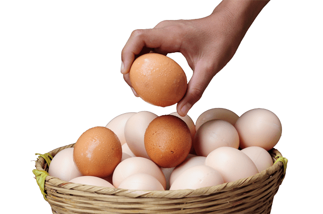 Vilket ägg är bäst?